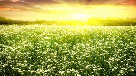 light, field, grass