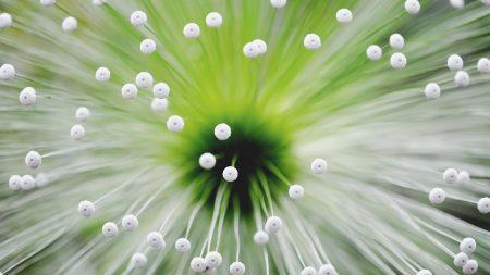light, flower, tendrils