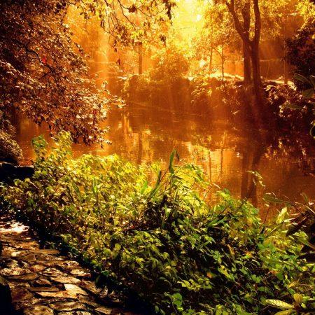 light, park, lake