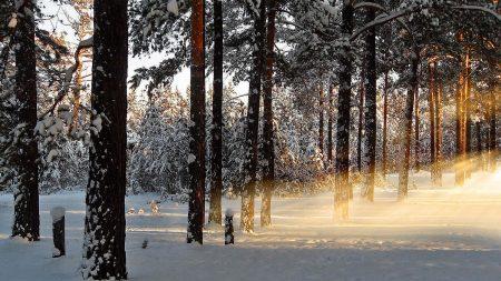 light, trees, rays