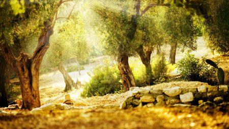 light, trees, stones