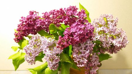 lilac, bouquet, vase