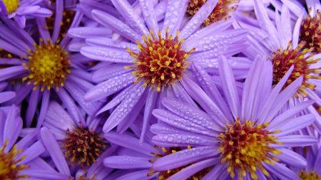 lilac, flowers, bouquet