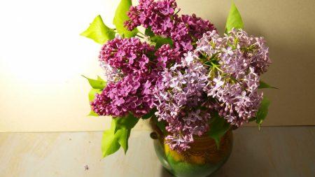 lilac, vase, leaves