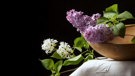 lilac, white, purple
