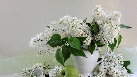 lilacs, twigs, snow-white
