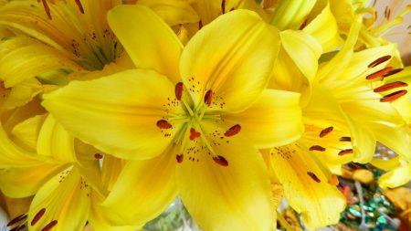 lilies, flowers, flower