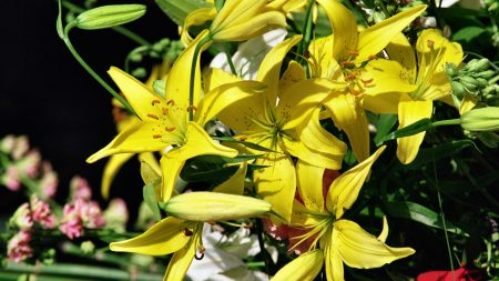 lilies, yellow, bouquet