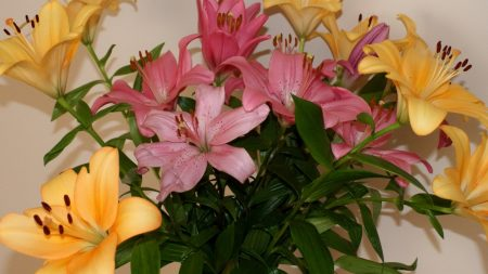 lily, bouquet, different