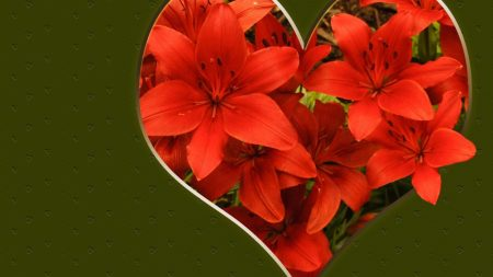 lily, flowers, red