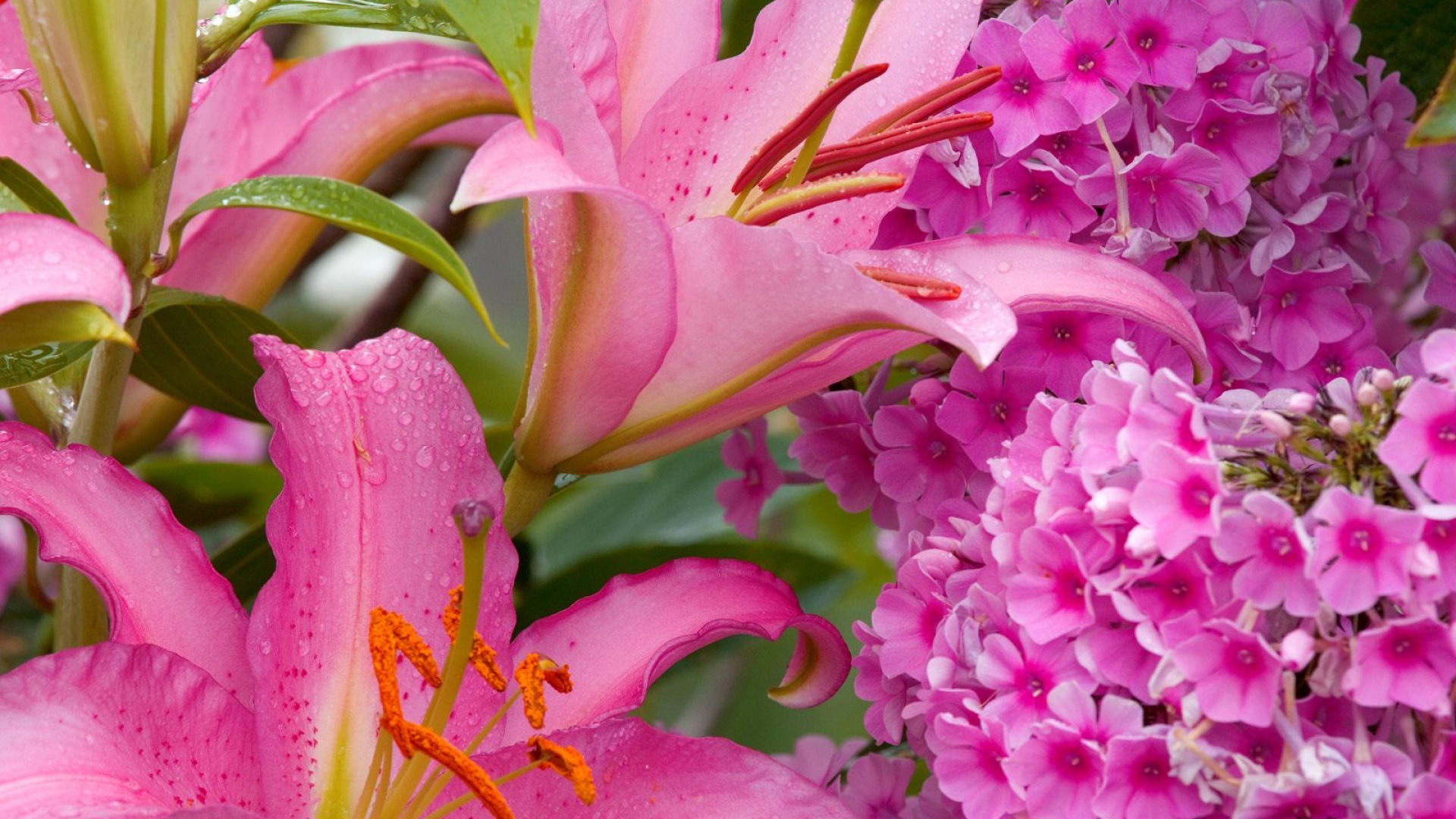 download wallpaper 1920x1080 lily small flowers drops