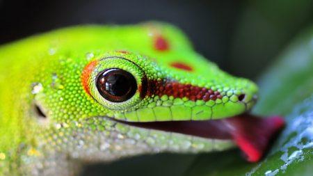 lizard, color, bright
