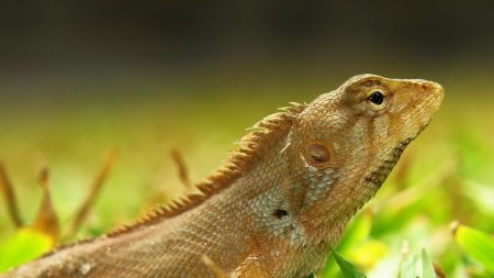 lizard, grass, color