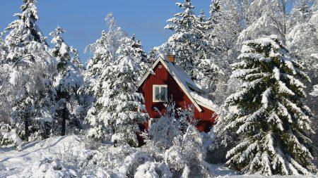 lodge, snow, trees