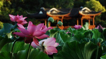 lotus, flowers, furniture