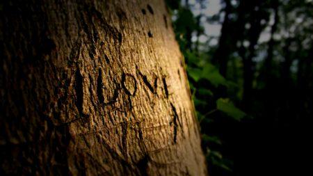 love, sign, wood