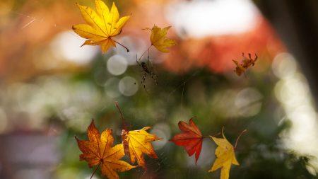 macro, autumn, web