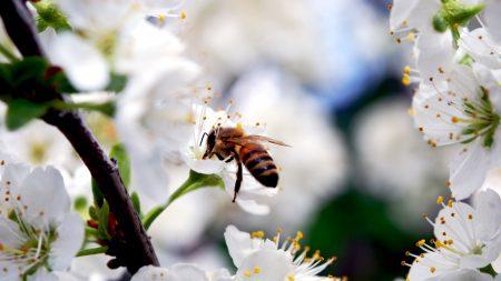 macro, bee, flower