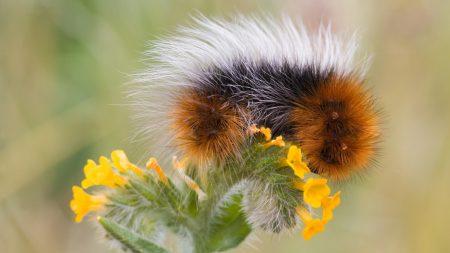 macro, flower, fluffy