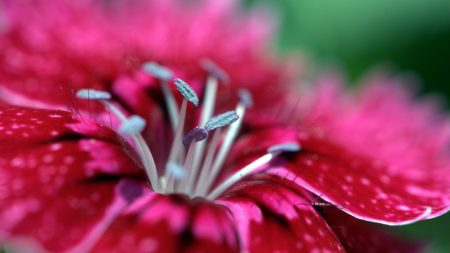 macro, flower, stamen