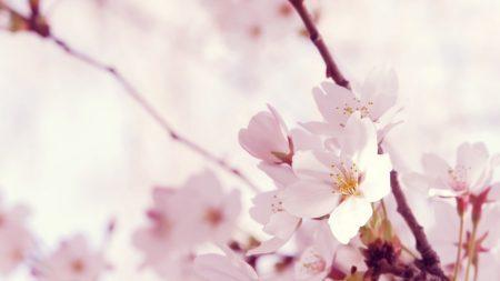 macro, flower, twig
