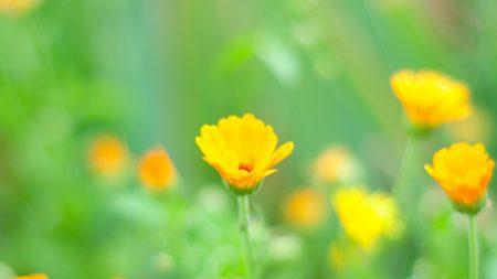 macro, flowers, grass