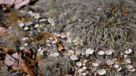 macro, moss, leaves