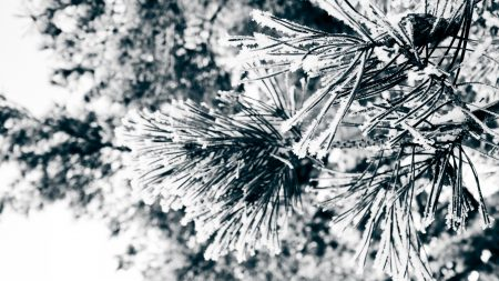 macro, twigs, pine needles