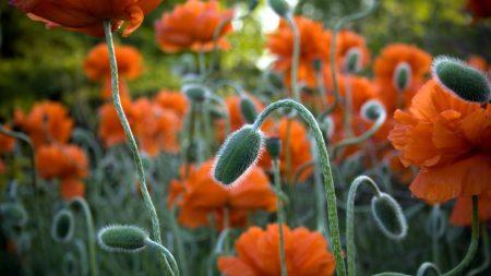 maki, flowers, stem