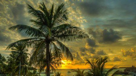 maldives, palms, trees
