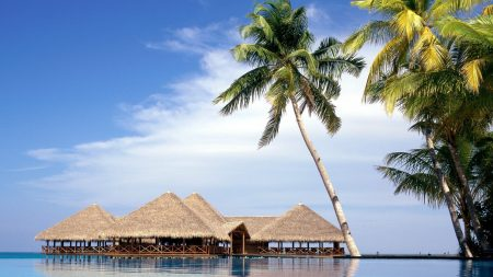 maldives, resort, palm trees