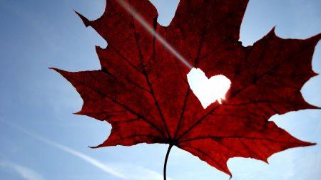 maple, leaf, heart