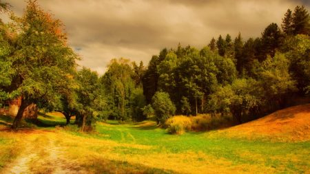 meadow, clouds, yellow