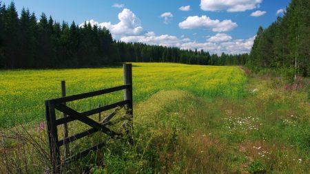 meadow, flowers, clouds
