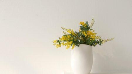 mimosa, flowers, vase
