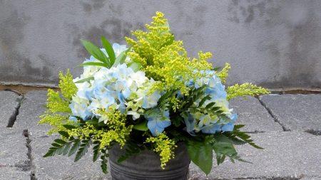 mimosa, hydrangea, bouquet