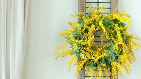mimosa, wreath, yellow