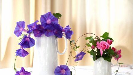 morning glory, roses, jugs