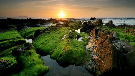 moss, rocks, decline