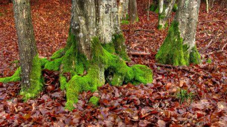 moss, trees, leaves