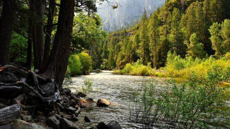mountain river, trees, bushes