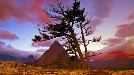mountain, stones, tree