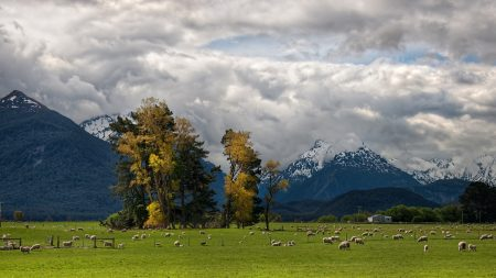 mountains, alps, sheep