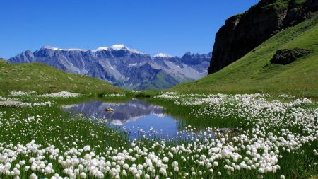 mountains, flowers, lake