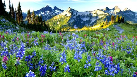 mountains, flowers, sky