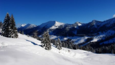 mountains, fur-trees, sky