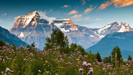 mountains, glade, flowers