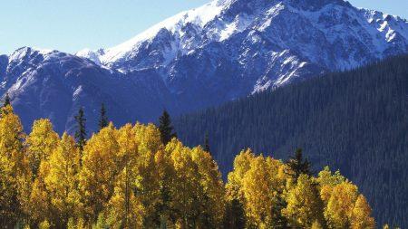 mountains, top, trees