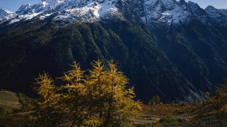 mountains, trees, tops