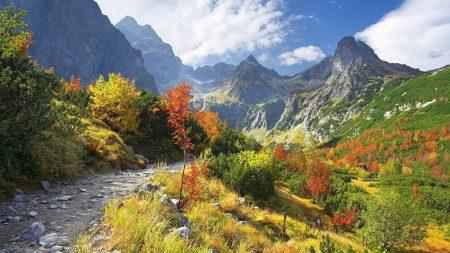 mountains, vegetation, road